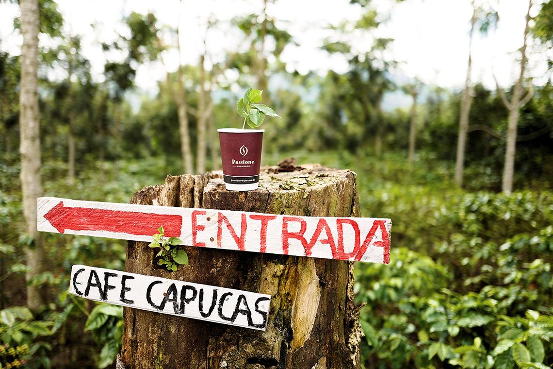 Honduras - Umami Barista Camp
