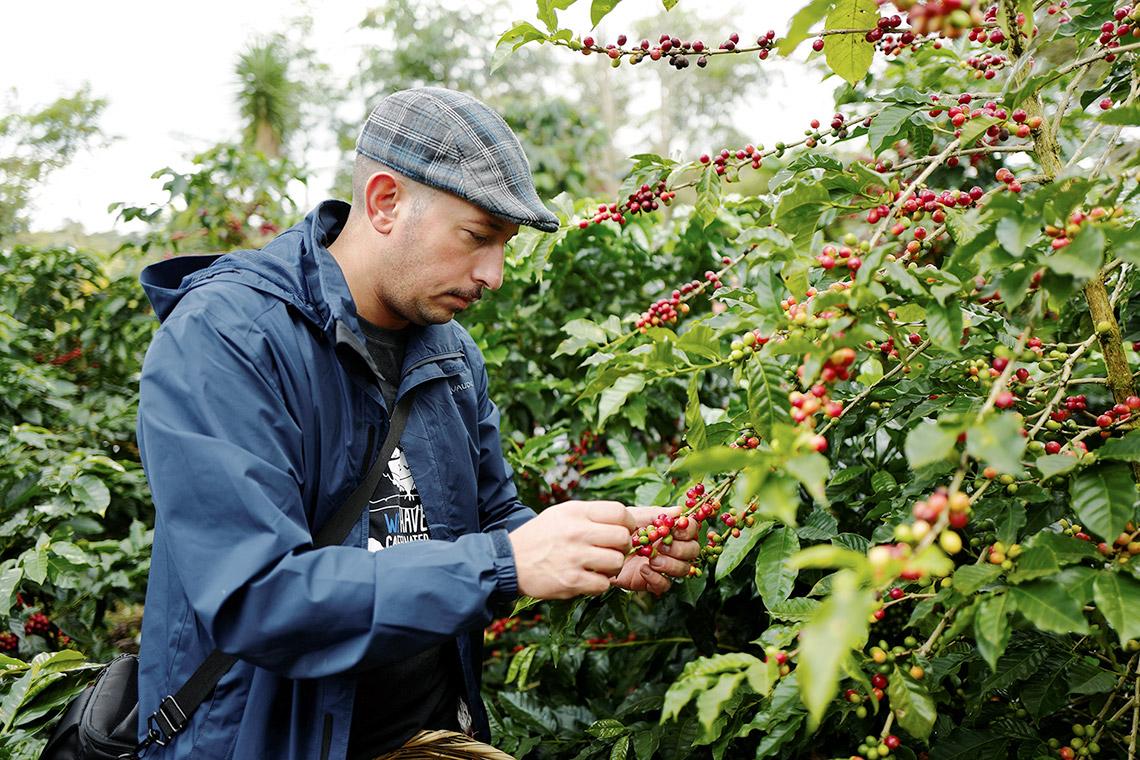 Keine leichte Arbeit: Kaffeebohnen pflücken